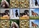 Memo Deluxe Horses