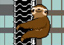 Slippery Sloth