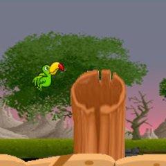 Tucan Bird